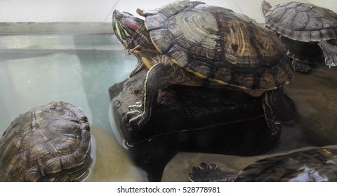 turtles in the zoo