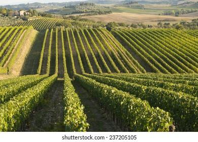 Tusca hills, Italy