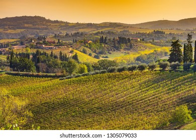 Tuscan autumn panoramic landscape with vineyards, cypress trees, houses in Tuscany, Italy, Europe
