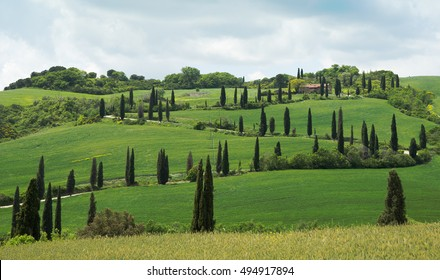 Tuscan countryside with road with cypresses