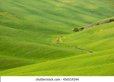 Tuscan green fields in Val D'Orcia Italy, April 2016