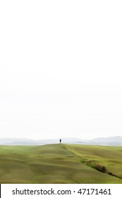 Tuscan hills with lonely cypress tree