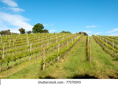 In the Tuscan hills with vineyards