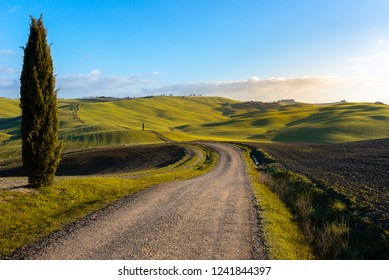 Tuscan landscape with green rolling hills and cypress trees, Italy