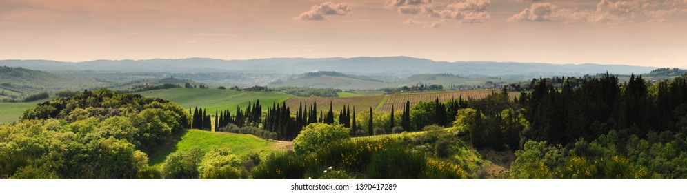 Tuscan landscape at sunset with cypress trees and vineyards near Siena. Italy