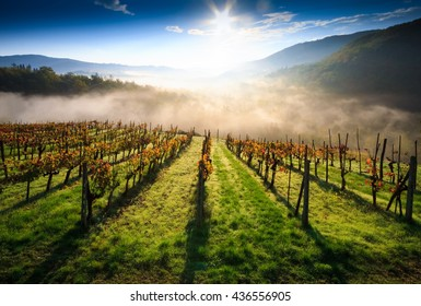 Tuscan vineyard landscape in autumn