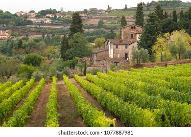 Tuscan vineyard in town of Panzano, Chianti, Italy