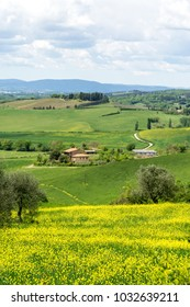 Tuscany countryside with fields and a farm in the background, isolated olive trees and yellow lawn in the front