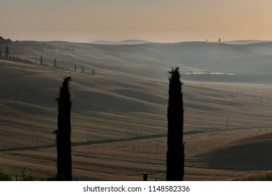 Tuscany countryside in summer at sunrise. Rural Landscape, cypress trees and sinuous hills