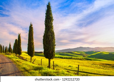 Tuscany, cypress tree group row and white rural road on sunset. Volterra, Pisa Italy, Europe.
