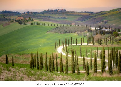 Tuscany, cypress trees, path and green landscape in springtime