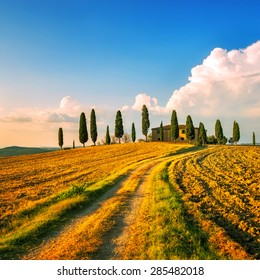 Tuscany, farmland and cypress trees and white road, country landscape on sunset. Siena, Italy, Europe.