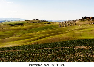 tuscany hills at the end of winter