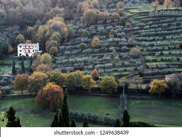 Tuscany, Italy, landscape of Arezzo countryside with  the traditional terracing for the cultivation of olive trees,  on autumn day