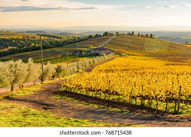 Tuscany, Italy - nivembre 23 2017: wonderful autumn on the hills of Siena, with vineyards of gold in the warm sun of the pits, famous wine production site