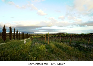 Tuscany Italy views of lamdscapes and vineyards