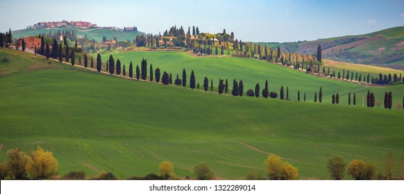 tuscany landscape with cypress alley at sunny day. Tuscany, Italy