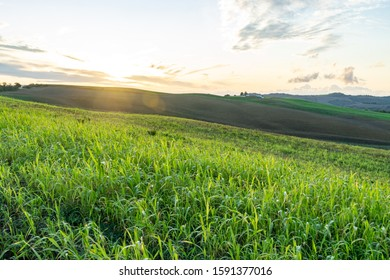 Tuscany landscape at gentle sunset light. Typical for the region tuscan farm, hills, vineyard. Italy, Europe