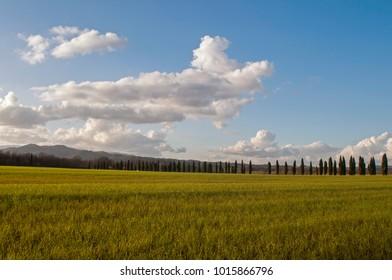 Tuscany landscape (Italy)