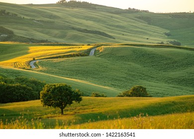 Tuscany landscape at sunrise. Typical for the region tuscan farm