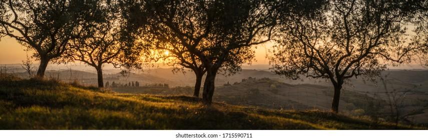 Tuscany landscape in sunset, Italy, Europe.
