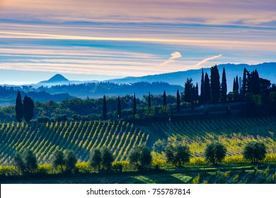 Tuscany landscape with vineyard, hills and mountain