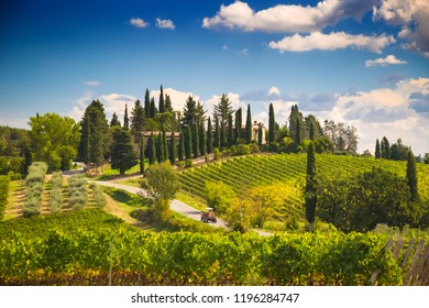 Tuscany landscape with vineyards and cypress trees, Italy