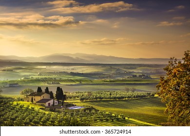 Tuscany Maremma foggy morning, farmland and green fields country landscape. Italy, Europe.