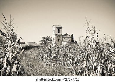 Tuscany Romanesque church immersed in a corn field - sepia toned (Italy)