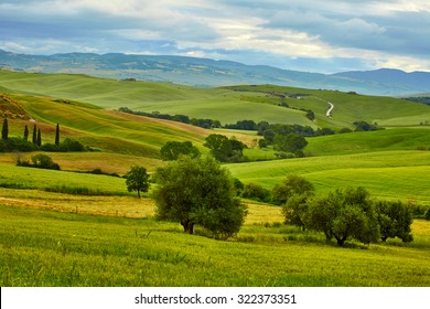 Tuscany, rural sunset landscape. Countryside farm, cypresses trees, green field, sun light and cloud.
