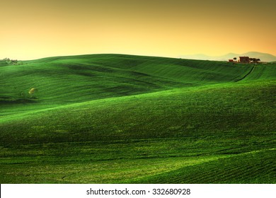 Tuscany spring, rolling hills on sunset. Rural landscape. Green fields, lonely olive tree and farmlands. Volterra Italy, Europe