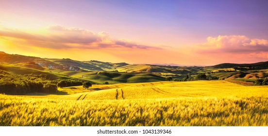 Tuscany spring, rolling hills at sunset. Volterra rural landscape. Green fields and trees Italy, Europe