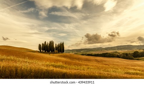tuscany sunny landscape at sunset. Hills in summer. Wheat meadow and Cypress. Warm vintage effect