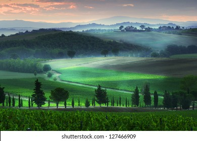 Tuscany vineyard in the morning