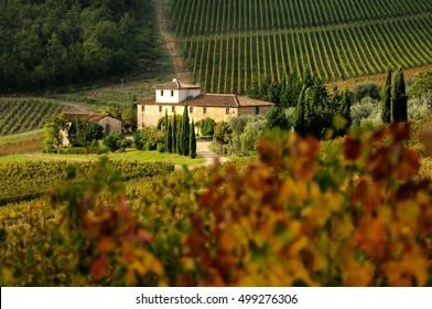 Tuscany vineyards in Autumn. Italy.