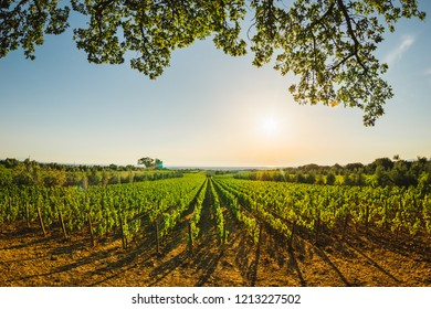 Tuscany vineyards in the sunset
