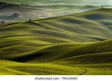 Tuscany winter, rolling hills on misty sunrise. Rural landscape. Green fields and farmlands. Italy, Europe