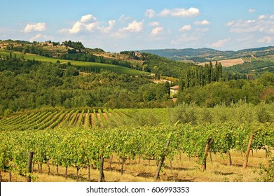 TUSCANY/ITALY - JUN 04, 2015: The rural Tuscany from the most beautiful side. Grape vines, blue sky, rural charm and small hills. A must for every holiday maker.