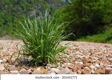 A tussock of green grass on the bank of the Buffalo River, Arkansas