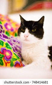 Tuxedo Cat and Colorful Pillow