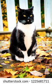 A tuxedo cat sitting on a wooden porch covered with fall leaves with a white railing in the background.