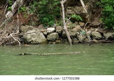 Tuxtla Gutierrez;  United Mexican States - may 14 2018 : crocodile in the El Sumidero canyon