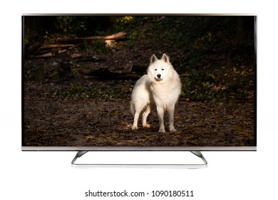 TV - 4K resolution modern television