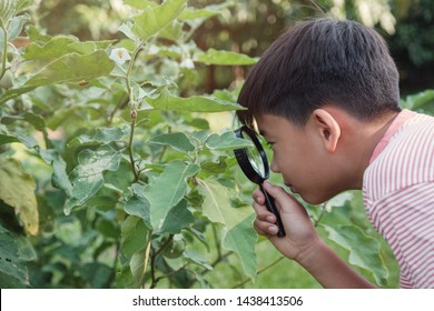 Tween preteen Asian boy looking at leaves through a magnifying glass, montessori natural learning homeschool education, Plant pathology