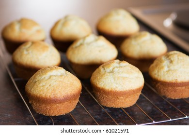 Twelve freshly baked vanilla muffins on metal grid cooling off