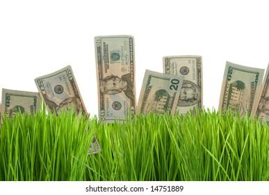 Twenty dollar bills growing in the green grass