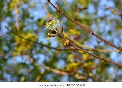 twig in bloom - spring time