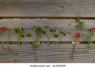 Twig of blueberries and cow berries on the rustic table