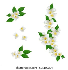 Twig bright white jasmine flowers. Spring composition.