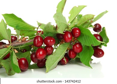 Twig with cherries, isolated on white